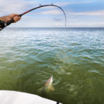 Spinner Shark Fishing in Charleston