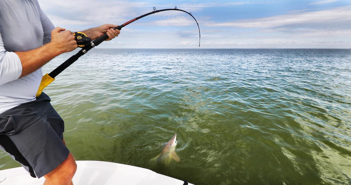 Spinner Shark Fishing in Charleston