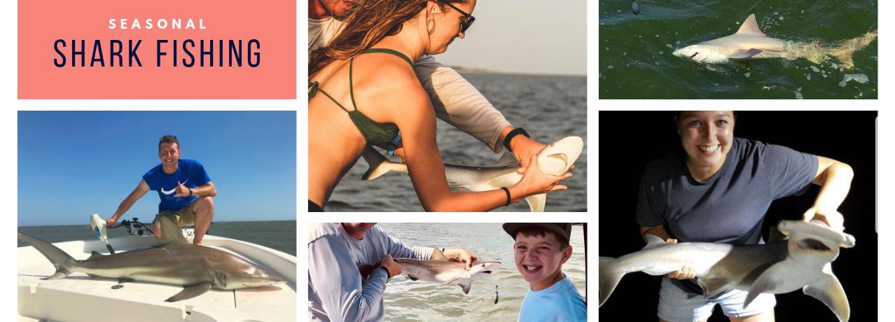 Shark Fishing in Charleston SC