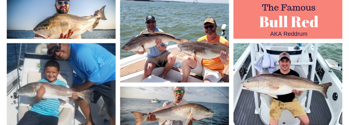 Charleston Bull Reddrum Fishing Charter
